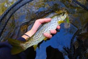 stage pêche technique nymphe rivière pays basque
