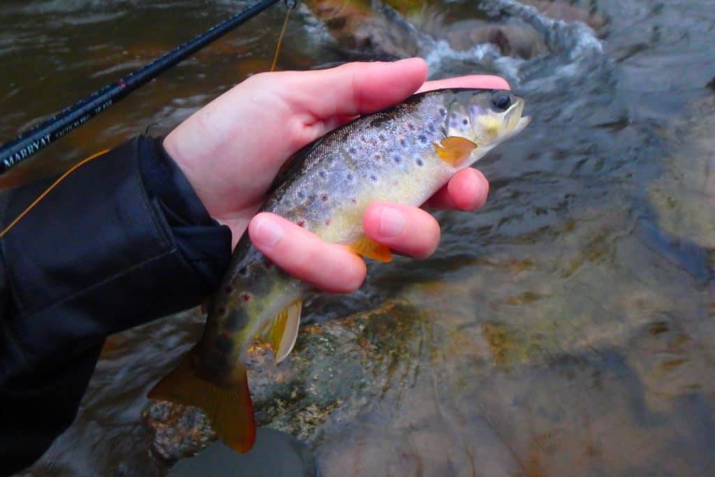 pêche mouche pays basque