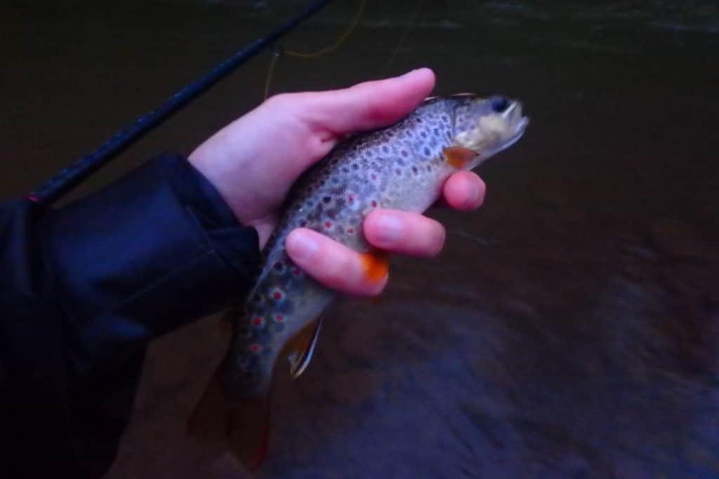 pêche en navarre