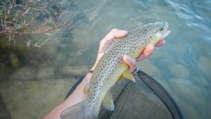 pêche en nymphe en navarre pays basque